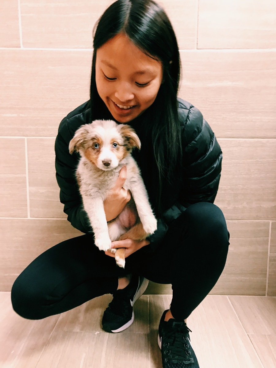 Blogmas DAY 2: Puppy Shopping